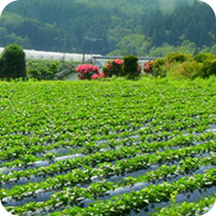 臼杵農場(大分県)