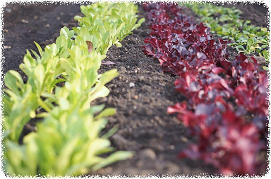 季節折々の新鮮旬野菜の収穫体験