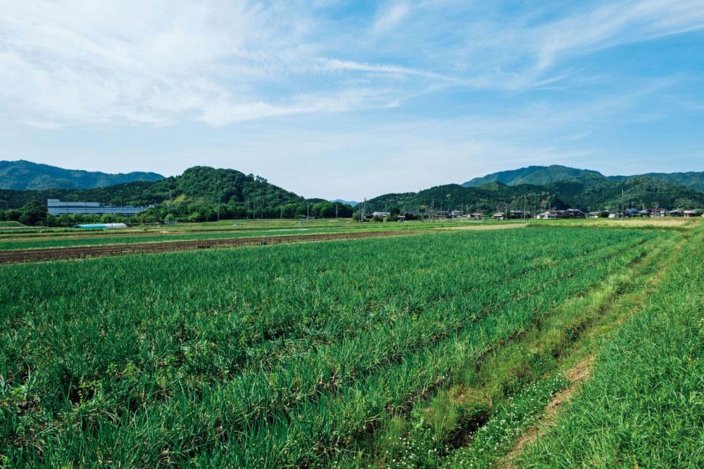 栄養をたっぷり含んだ土は、健康な作物を育て、その作物を食べた動物のふんなどが肥料(堆肥)となり、再び土の栄養へと還ります。
