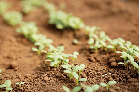堆肥を鋤き込むことで、土の中に微生物が増え、活発に働くようになります。土の栄養があがり、作物が育ちやすい環境となるのです。