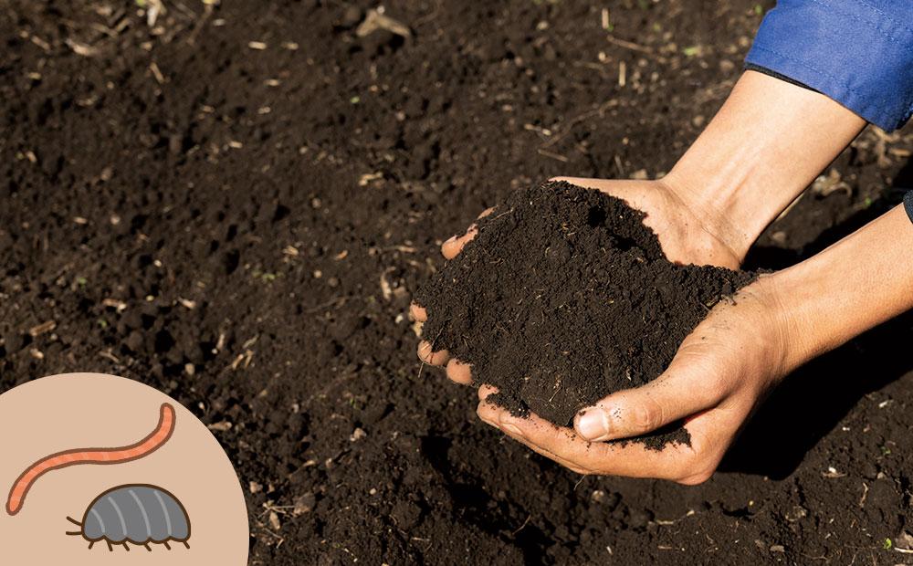微生物のいる土壌をさらに食べて分解するのが、ミミズやダンゴムシです
