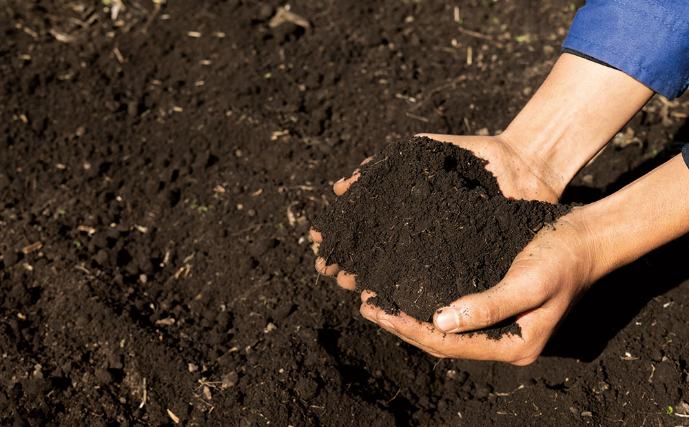 豊かな土づくりは、微生物との共生がカギです