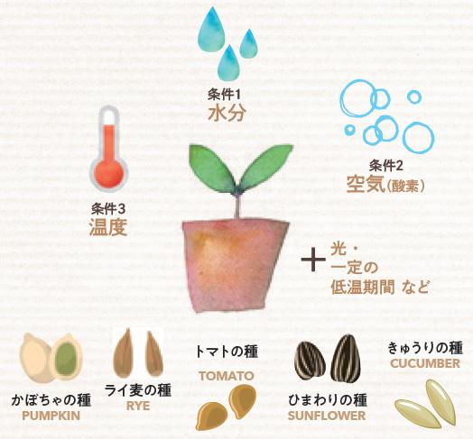 種は条件がそろって初めて発芽します