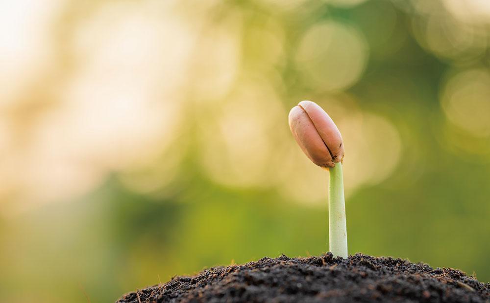 私たちは、植物のどの部分をを食べているのでしょう?