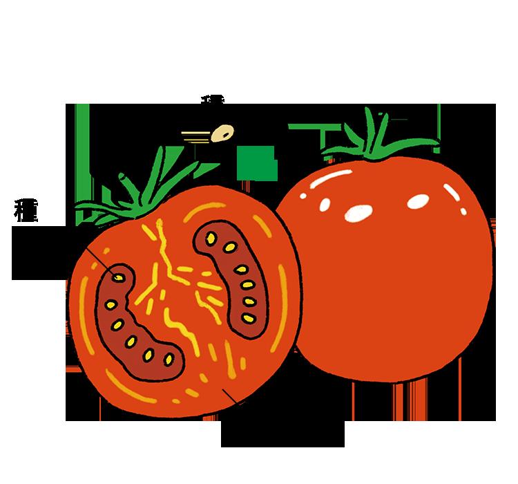 実(種)を食べるトマト