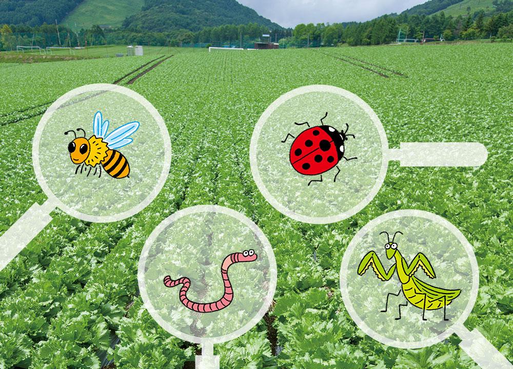 小さな虫も、栽培の助けになっています