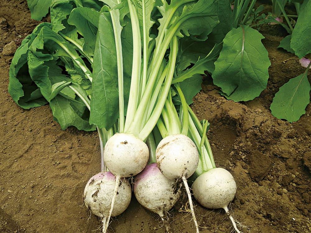 いい野菜ってどんな野菜のことなのでしょう?