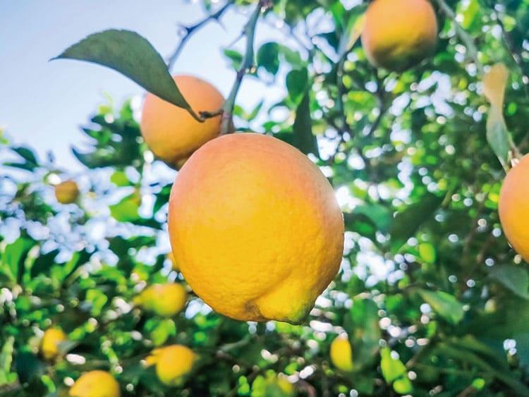果物などのワックスは、鮮度を維持するために使われています