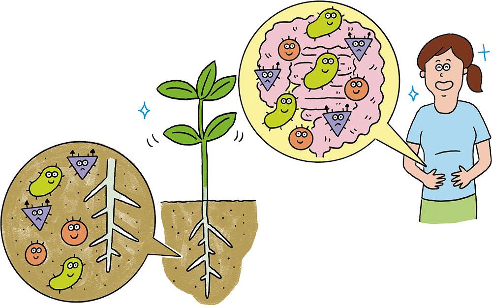 実はそっくり!? 人も土も、健康は微生物が作る!