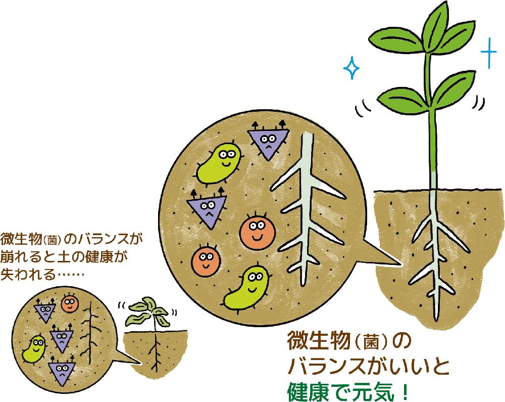 土の中ではたらく(1立方センチメートルの場合)約1億個の微生物(菌)