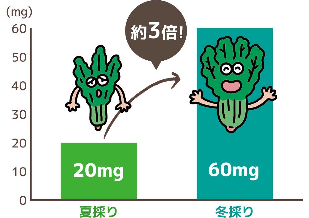 ほうれん草のビタミンCは 夏と冬で こんなに量が違います!